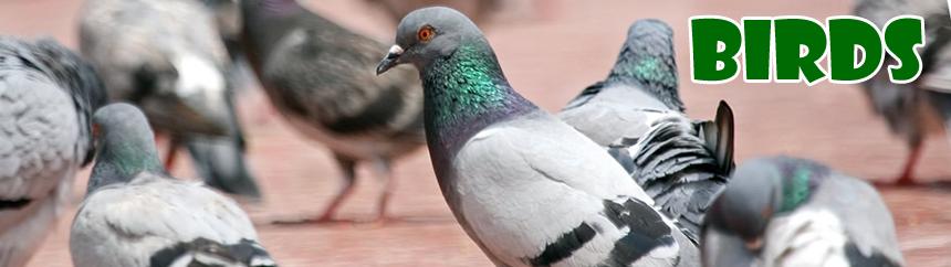 Birds And Pigeon Problem Pest Control Kirkbymoorside